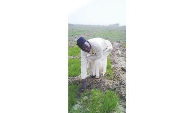 Recession: More urban-dwellers turn to farming