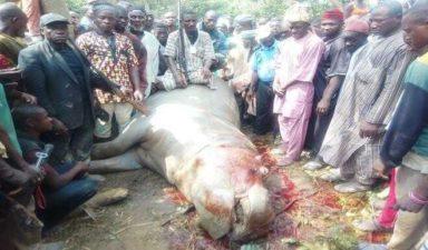Hunters kill hippopotamus in Kwali community