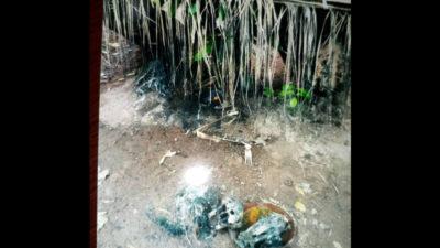 Police uncover Badoo shrine, arrests owner in Ikorodu