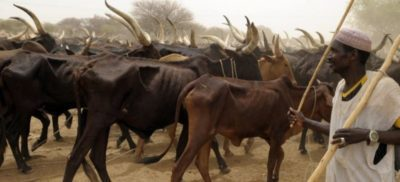 Taraba Again! 20 reportedly killed, 300 cows stolen in fresh attack on Fulani communities
