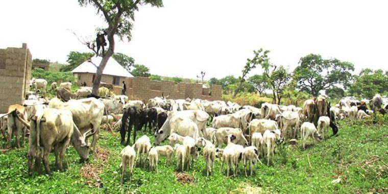 Muslim community tells FG to support ranching