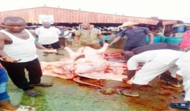 Sallah: NTIC Foundation distributes meat from 60 cows to less privilege